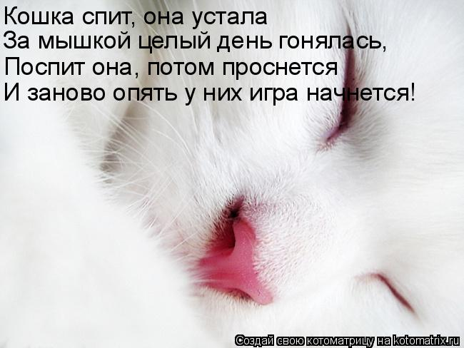Котоматрица: Кошка спит, она устала За мышкой целый день гонялась, Поспит она, потом проснется И заново опять у них игра начнется!