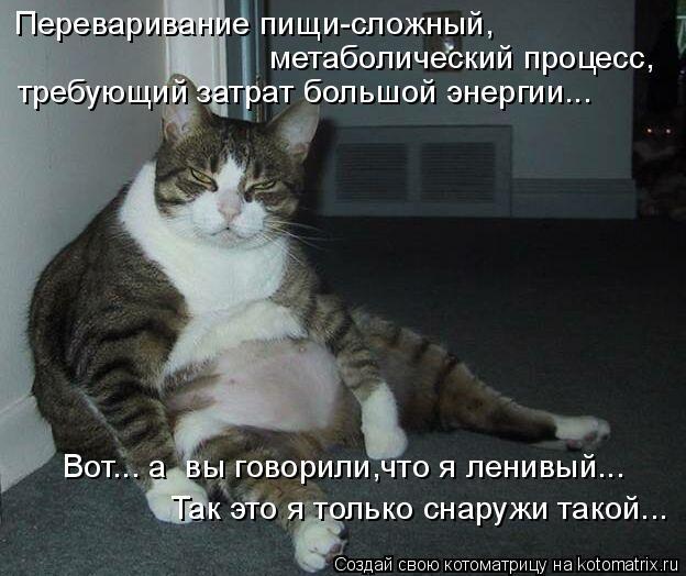 Котоматрица: Переваривание пищи-сложный,  метаболический процесс, требующий затрат большой энергии... Вот... а  вы говорили,что я ленивый... Так это я тольк