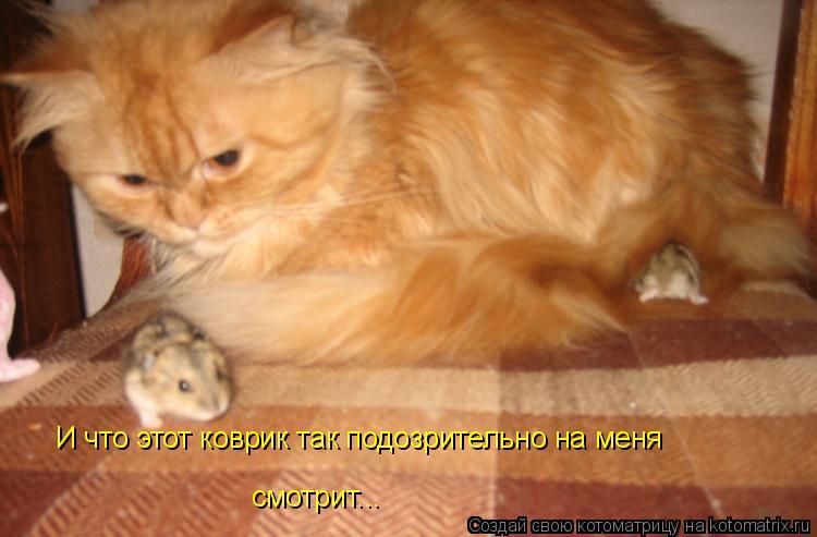 Котоматрица: И что этот коврик так подозрительно на меня смотрит...