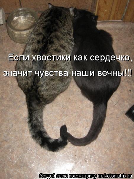 Котоматрица: Если хвостики как сердечко, значит чувства наши вечны!!!
