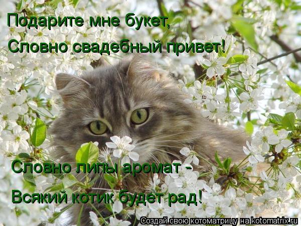 Котоматрица: Подарите мне букет, Словно свадебный привет! Словно липы аромат - Всякий котик будет рад!