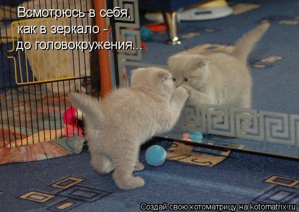Котоматрица: Всмотрюсь в себя, как в зеркало - до головокружения...