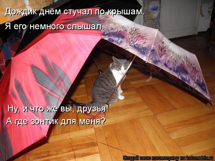 Котоматрица: Дождик днём стучал по крышам. Я его немного слышал. Ну, и что же вы, друзья! А где зонтик для меня?