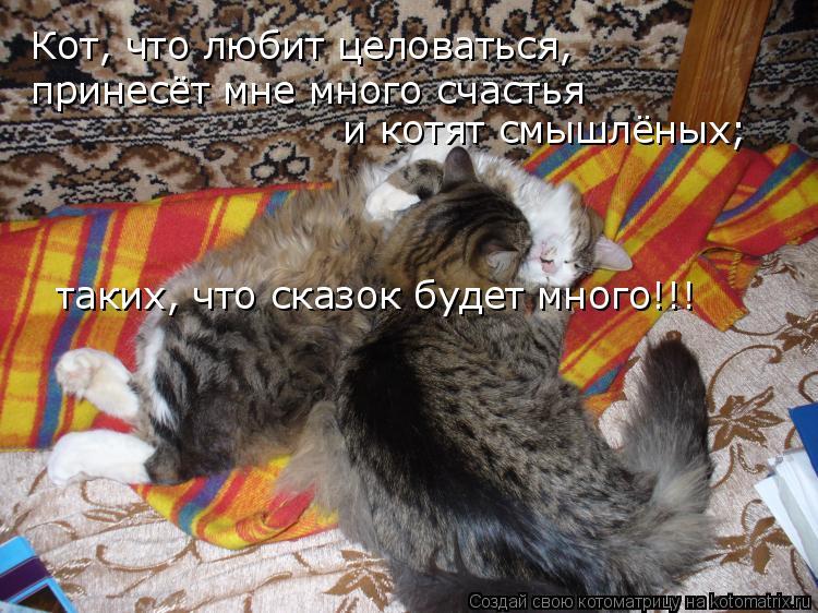 Котоматрица: Кот, что любит целоваться, принесёт мне много счастья  и котят смышлёных; таких, что сказок будет много!!!