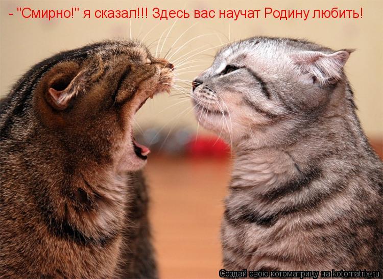 """Котоматрица: - """"Смирно!"""" я сказал!!! Здесь вас научат Родину любить!"""