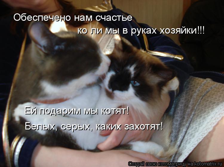 Котоматрица: Обеспечено нам счастье  ко ли мы в руках хозяйки!!! Ей подарим мы котят! Белых, серых, каких захотят!