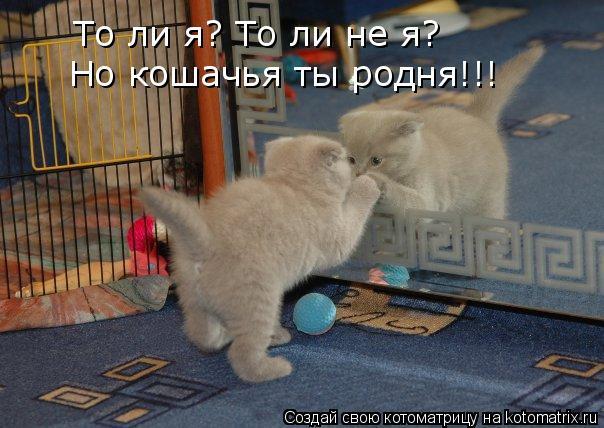 Котоматрица: То ли я? То ли не я? Но кошачья ты родня!!!