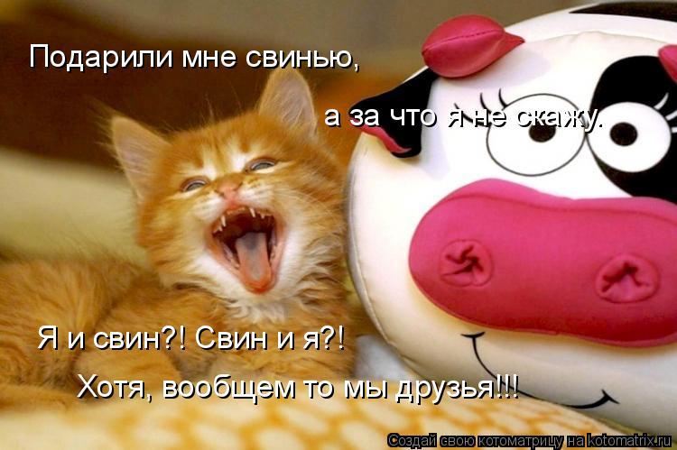 Котоматрица: Подарили мне свинью,  а за что я не скажу. Я и свин?! Свин и я?! Хотя, вообщем то мы друзья!!!