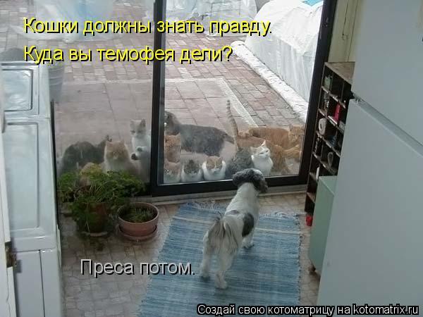 Котоматрица: Преса потом. Кошки должны знать правду. Куда вы темофея дели?