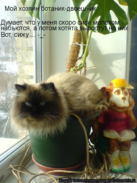 Котоматрица: Мой хозяин ботаник-двоешник Думает, что у меня скоро сиси молоком  набъются, а потом котята выростут на них Вот, сижу ... -_-
