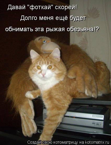"""Котоматрица: Давай """"фоткай"""" скорей! Долго меня ещё будет обнимать эта рыжая обезьяна!? обнимать эта рыжая обезьяна!?"""