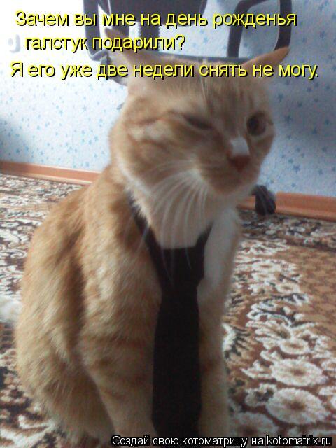 Котоматрица: Зачем вы мне на день рожденья  галстук подарили? Я его уже две недели снять не могу.