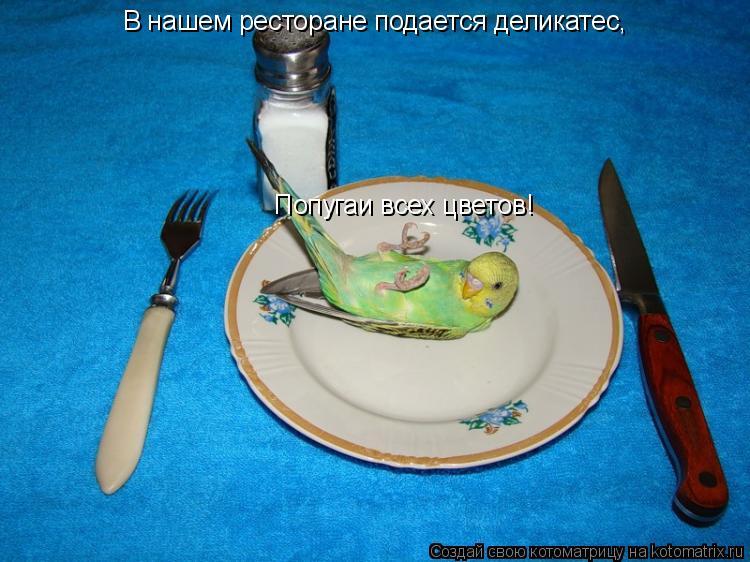 Котоматрица: В нашем ресторане подается деликатес, Попугаи всех цветов!
