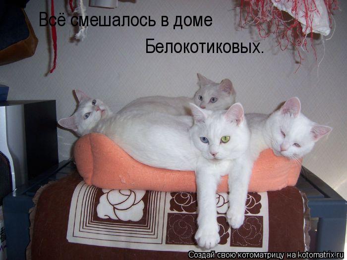 Котоматрица: Всё смешалось в доме Белокотиковых.
