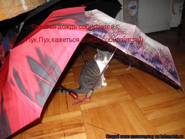 Котоматрица: Кажется дождь собирается... Пух,Пух,кажеться дождь собирается)))