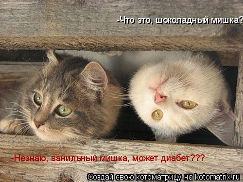 Котоматрица: -Что это, шоколадный мишка? -Незнаю, ванильный мишка, может диабет???