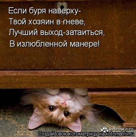 Котоматрица: Если буря наверху- Лучший выход-затаиться, В излюбленной манере! Твой хозяин в гневе,