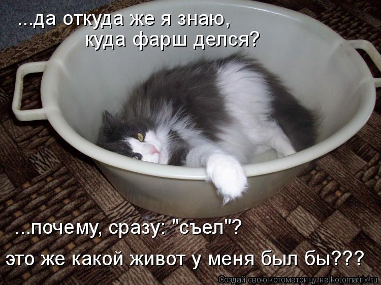"""Котоматрица: ...да откуда же я знаю,  куда фарш делся? ...почему, сразу: """"съел""""? это же какой живот у меня был бы???"""