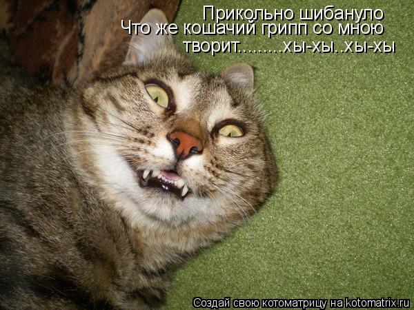 Котоматрица: Прикольно шибануло Что же кошачий грипп со мною   творит.........хы-хы..хы-хы