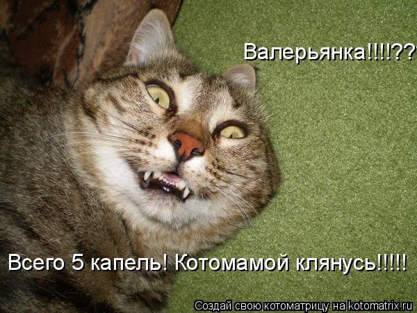 Котоматрица: Валерьянка!!!!???? Всего 5 капель! Котомамой клянусь!!!!!