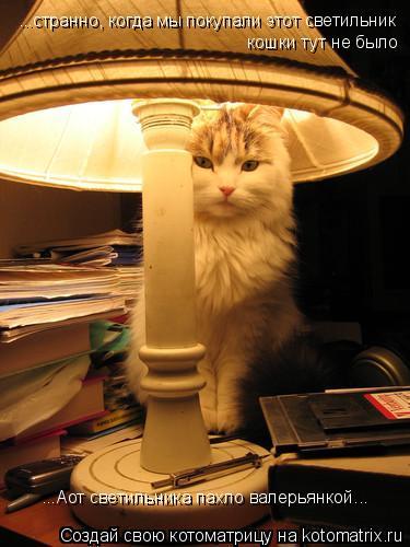Котоматрица: ...странно, когда мы покупали этот светильник кошки тут не было ...Аот светильника пахло валерьянкой...