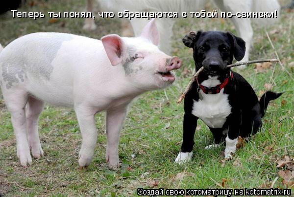 Котоматрица: Теперь ты понял, что обращаются с тобой по-свински!