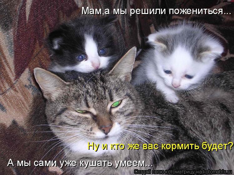 Котоматрица: А мы сами уже кушать умеем... Мам,а мы решили пожениться... Ну и кто же вас кормить будет?