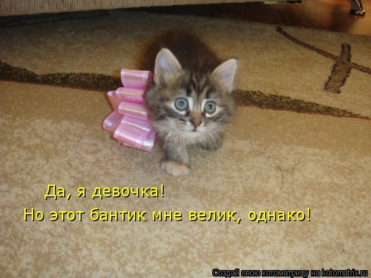 Котоматрица: Да, я девочка! Но этот бантик мне велик, однако!