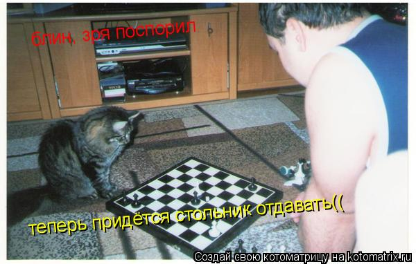 Котоматрица: блин, зря поспорил блин, зря поспорил теперь придётся стольник отдавать((