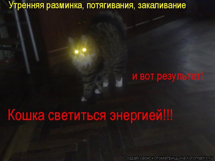 Котоматрица: и вот результат!  Кошка светиться энергией!!! Утренняя разминка, потягивания, закаливание