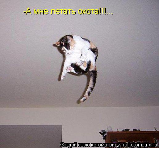Котоматрица: -А мне летать охота!!!...