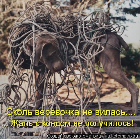 Котоматрица: Сколь верёвочка не вилась.... ... Жаль с концом не получилось!