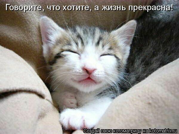 Котоматрица: Говорите, что хотите, а жизнь прекрасна!