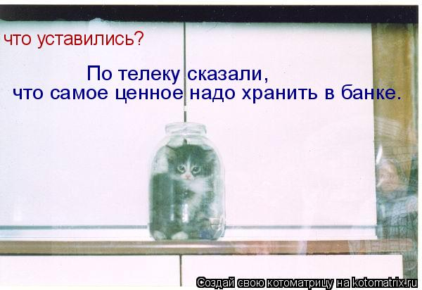 Котоматрица: что уставились? В наше время самое ценное надо хранить в банке. что уставились? По телеку сказали, что самое ценное надо хранить в банке.