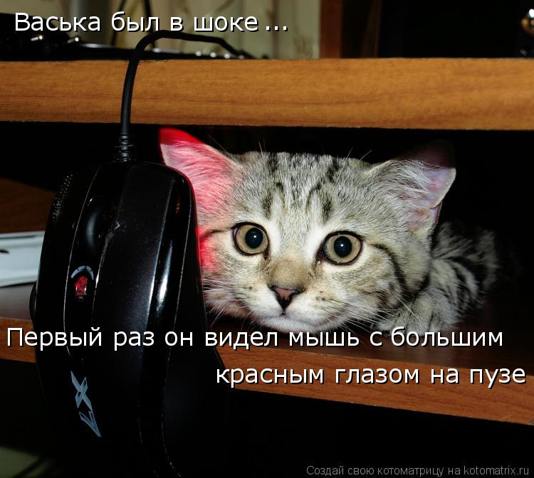 Котоматрица: Васька был в шоке Первый раз он видел мышь с большим красным глазом на пузе ...