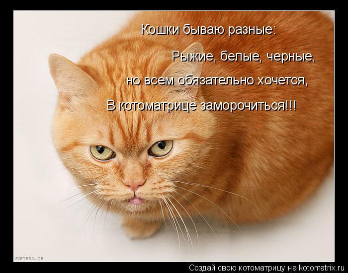 Котоматрица: Кошки бываю разные: Рыжие, белые, черные, но всем обязательно хочется, В котоматрице заморочиться!!!