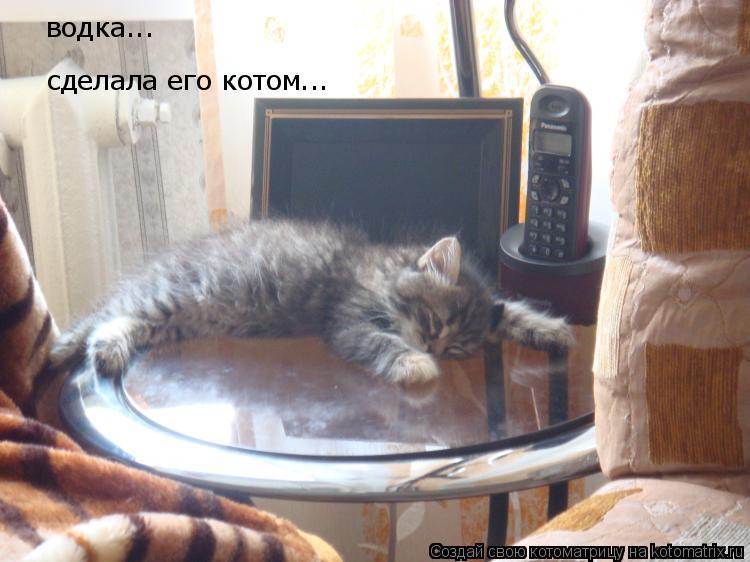 Котоматрица: водка... сделала его котом...