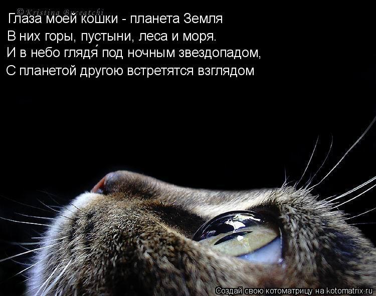 Котоматрица: Глаза моей кошки - планета Земля С планетой другою встретятся взглядом В них горы, пустыни, леса и моря. И в небо глядя́ под ночным звездоп