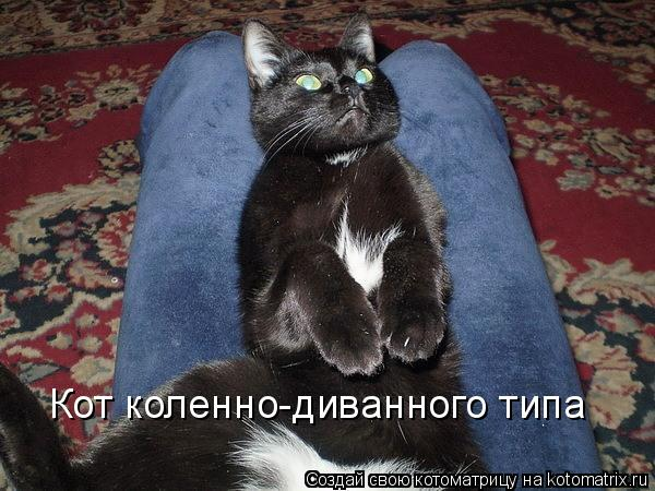Котоматрица: Кот коленно-диванного типа