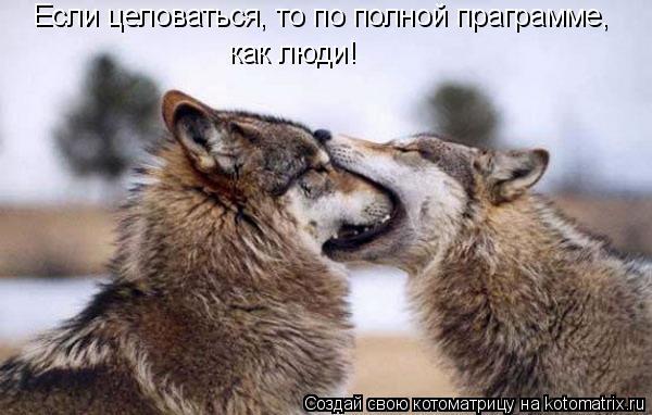 Котоматрица: Если целоваться, то по полной праграмме, как люди!