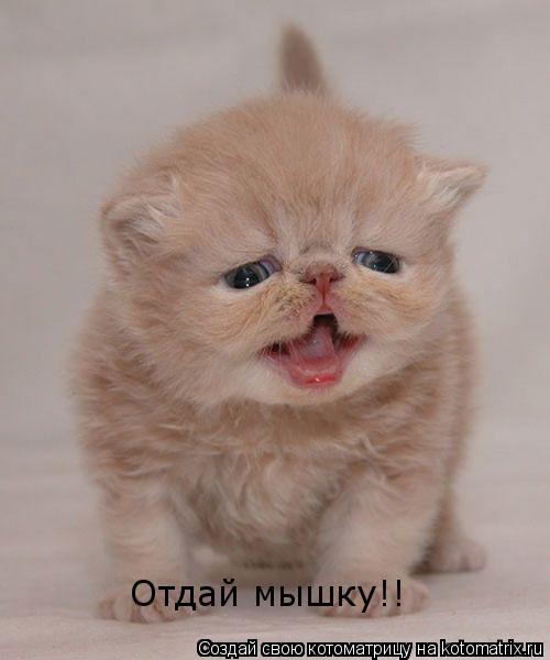 Котоматрица: Отдай мышку!!