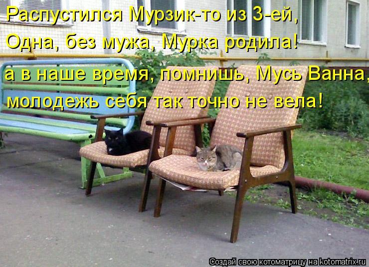 Котоматрица: Распустился Мурзик-то из 3-ей, Одна, без мужа, Мурка родила! молодежь себя так точно не вела! а в наше время, помнишь, Мусь Ванна,