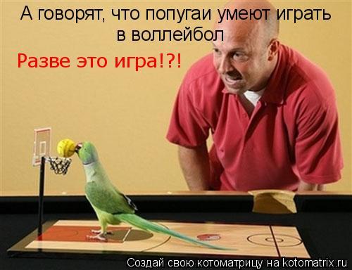 Котоматрица: А говорят, что попугаи умеют играть в воллейбол Разве это игра!?!