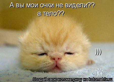 Котоматрица: А вы мои очки не видели?? а тело?? )))