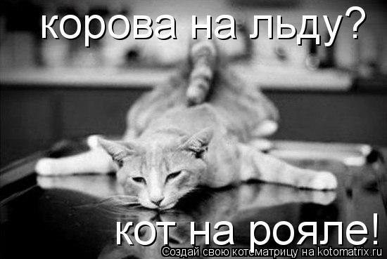 Котоматрица: корова на льду? кот на рояле!