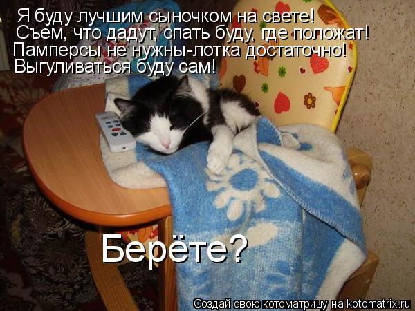 Котоматрица: Съем, что дадут, спать буду, где положат! Памперсы не нужны-лотка достаточно! Берёте? Я буду лучшим сыночком на свете! Выгуливаться буду сам!