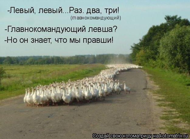 Котоматрица: -Левый, левый...Раз. два, три! (главнокомандующий) -Главнокомандующий левша? -Но он знает, что мы правши!