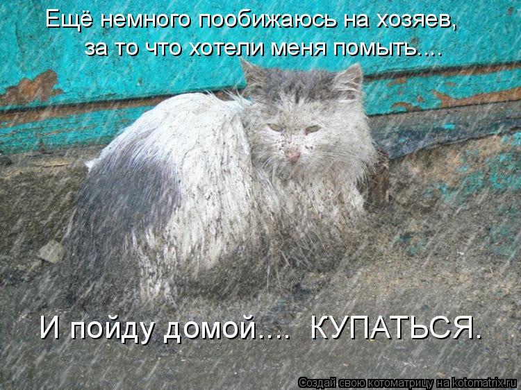 Котоматрица: Ещё немного пообижаюсь на хозяев,  за то что хотели меня помыть.... И пойду домой....  КУПАТЬСЯ.