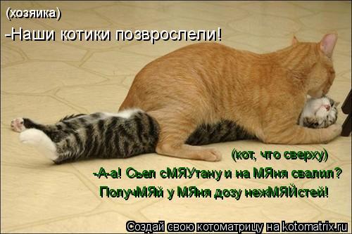 Котоматрица: (хозяика) -Наши котики позврослели! (кот, что сверху) -А-а! Сьел сМЯУтану и на МЯня свалил? ПолучМЯй у МЯня дозу нежМЯЙстей!