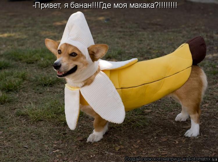 Котоматрица: -Привет, я банан!!!Где моя макака?!!!!!!!!
